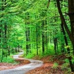image of a path through a green forest