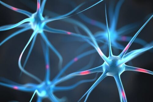 IMAGE OF BRAIN NEURONS